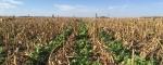 Корпорация AGCO начнет исследование в области регенеративного сельского хозяйства для разработки методов удержания углерода в почве