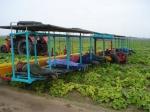 Платформа для уборки овощей ПУО-1А